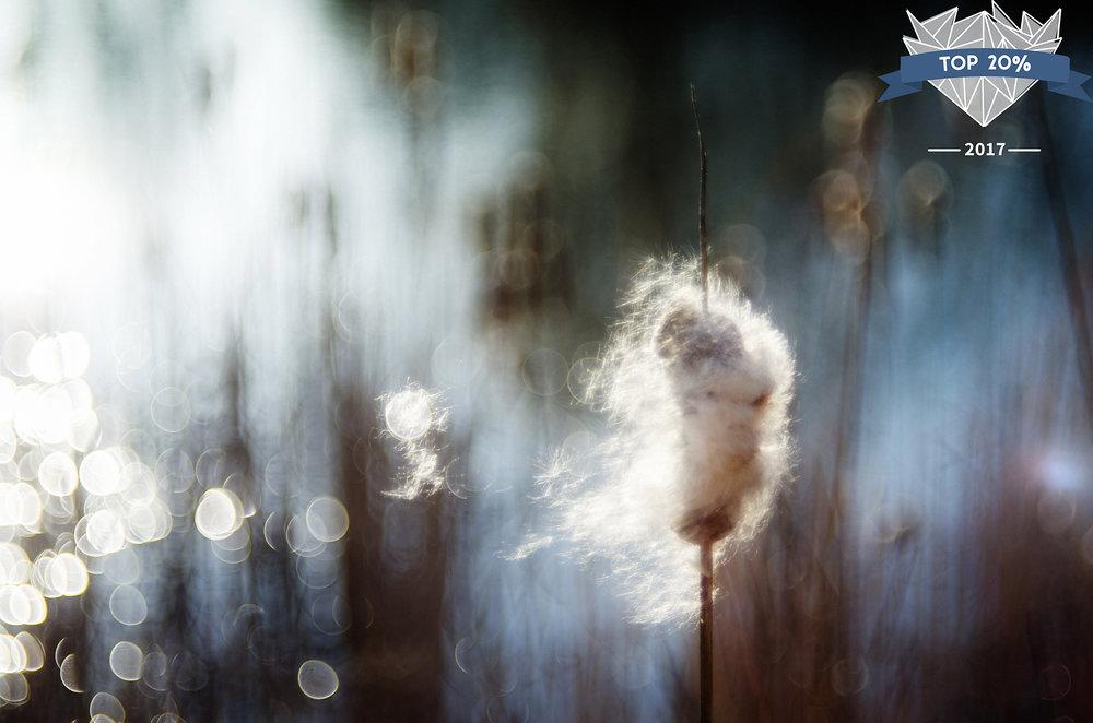 Shannon Kathleen Photography