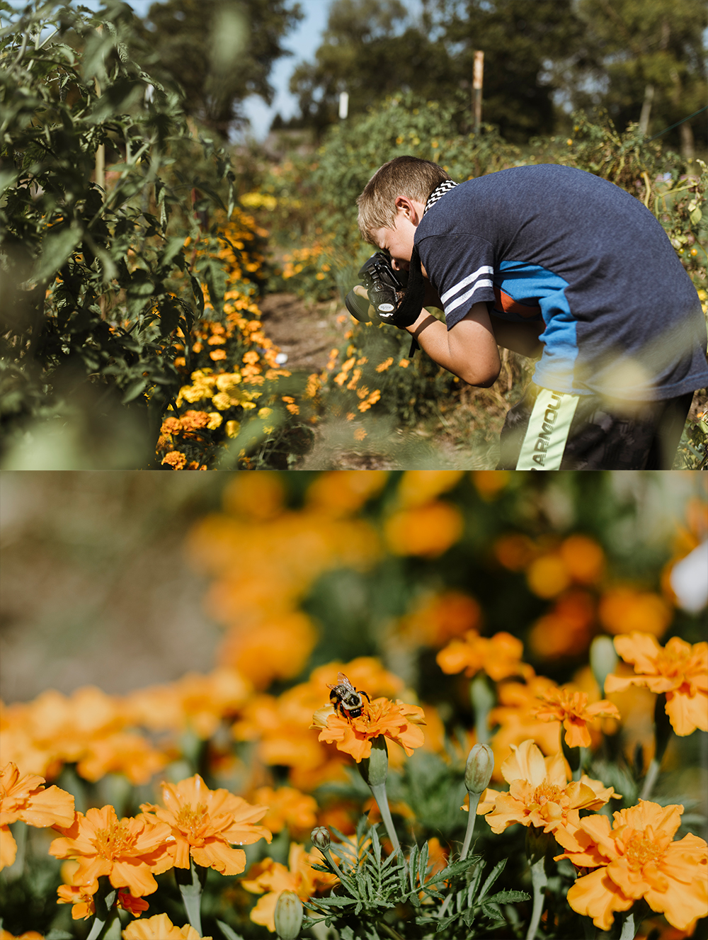 The image on top is one I took of him taking an image... and the one on the bottom is the photograph he took at that exact moment of a bee!! :)  <<insert proud momma here!!>>