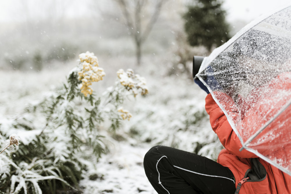 Boy photographing flowers in the snow | Shannon Kathleen Photography