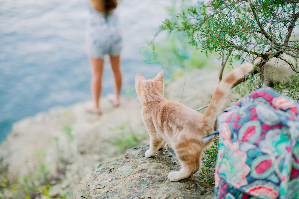 No this is not Carly's cat but she did follow us to every location of her session