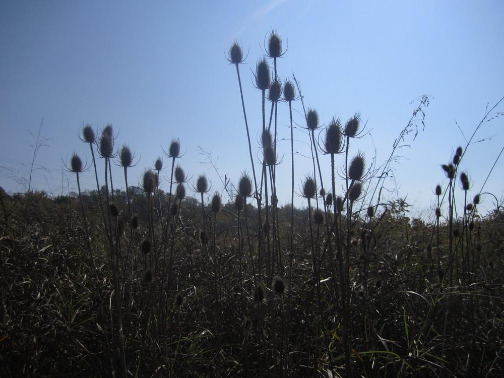 Prairie in winter. Photo by Brooke.