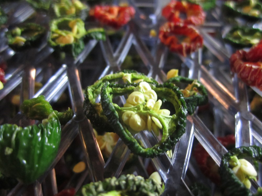 dry-hot-peppers-dehydrate
