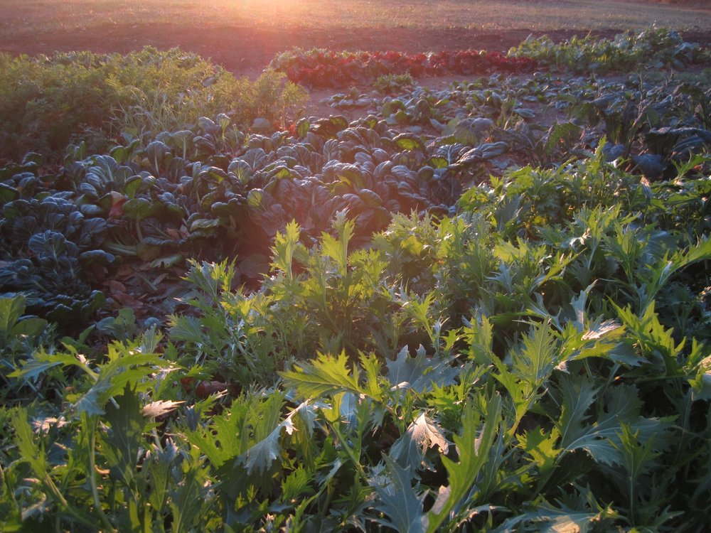 self-reliance-garden