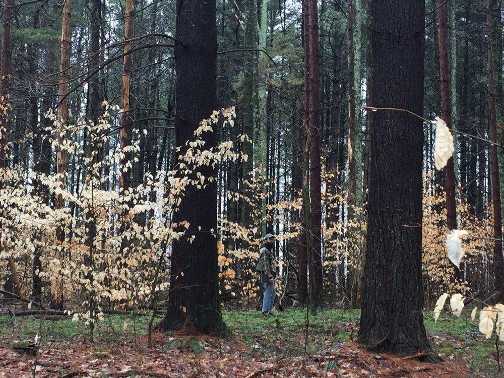 spring-foraging