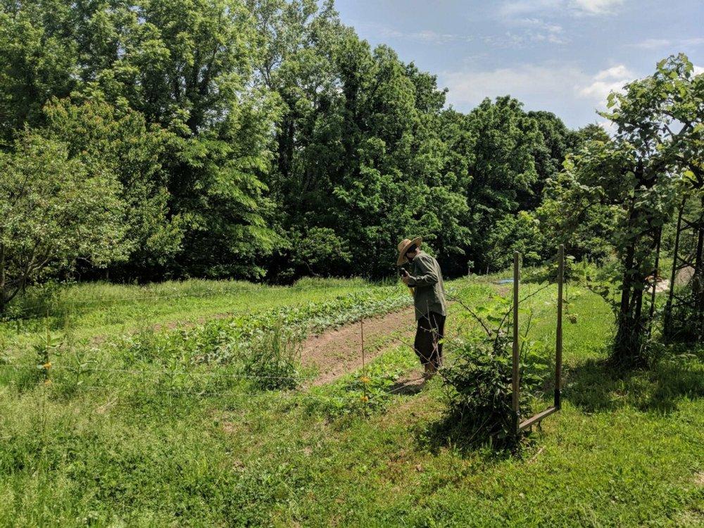 sam-sycamore-garden.jpg