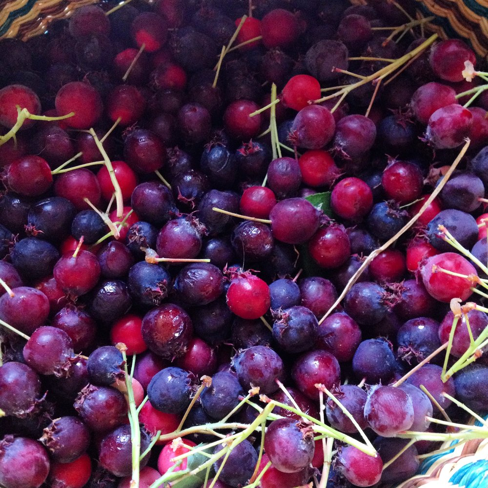 You will invariably end up with stems and unripe berries to sort out. It's all part of the process!