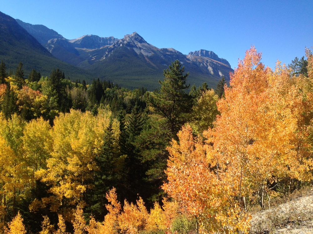 ...the view from one of my favourite fall bike rides from Banff to Johnston Canyon, along the Bow Valley Parkway.