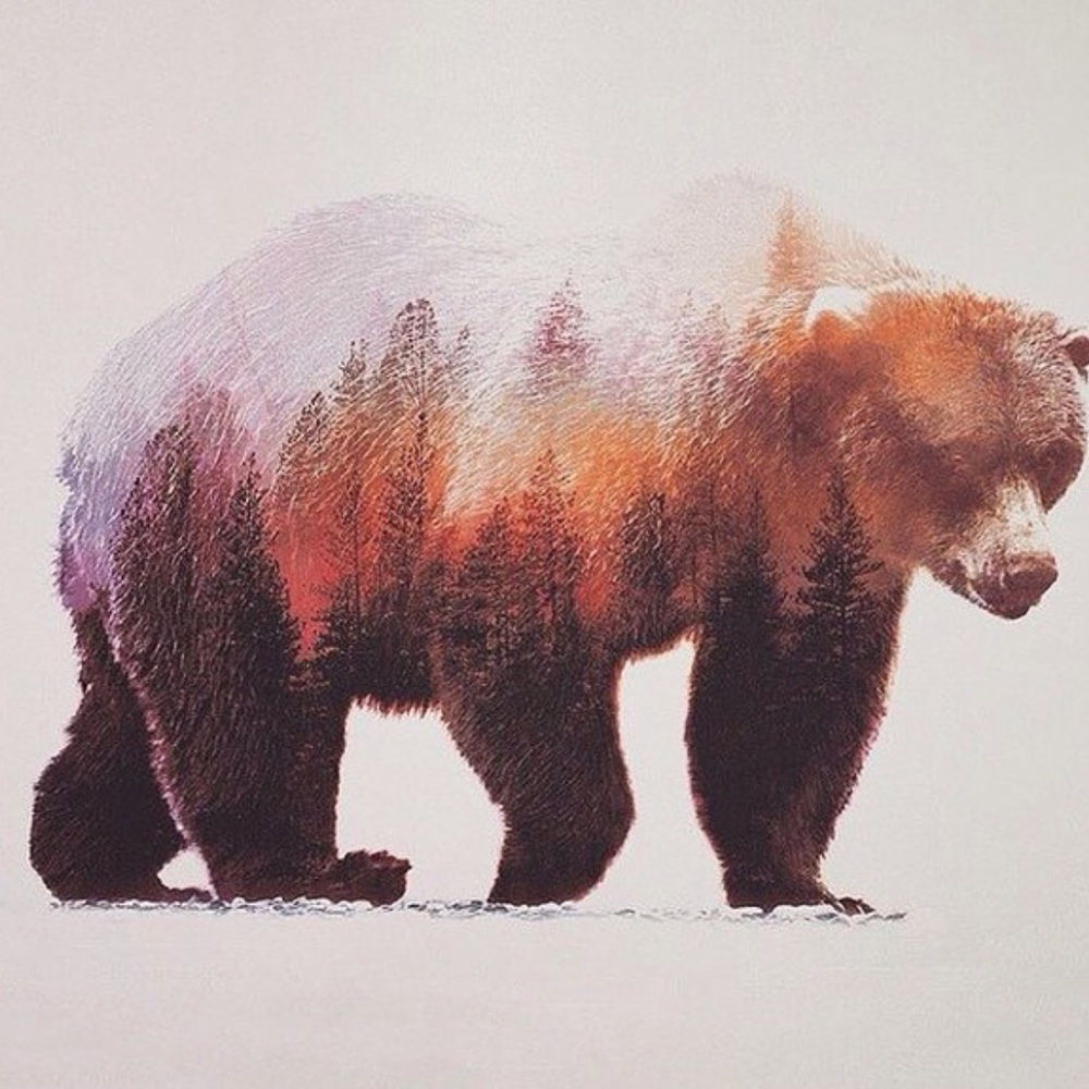 ... The powerful Grizzly Bear!