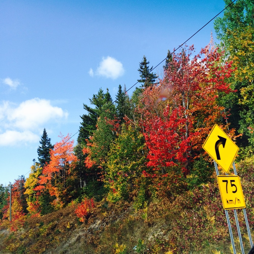 Our first signs of foliage, after leaving Forillon National Park