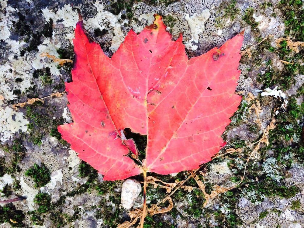 This is the first foliage photo I took upon returning to New Hampshire. This little leaf was fallen on the ground where we parked the trailer.