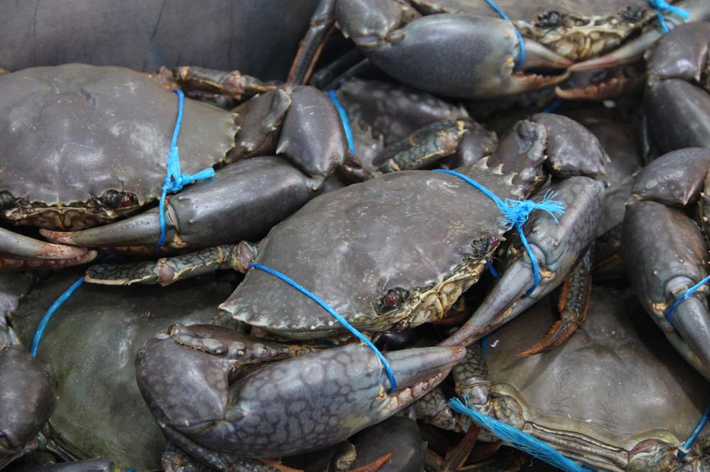 Crabby at Sydney Fish Market - Photo by Brianna Graves / Phoenix Mom Rising