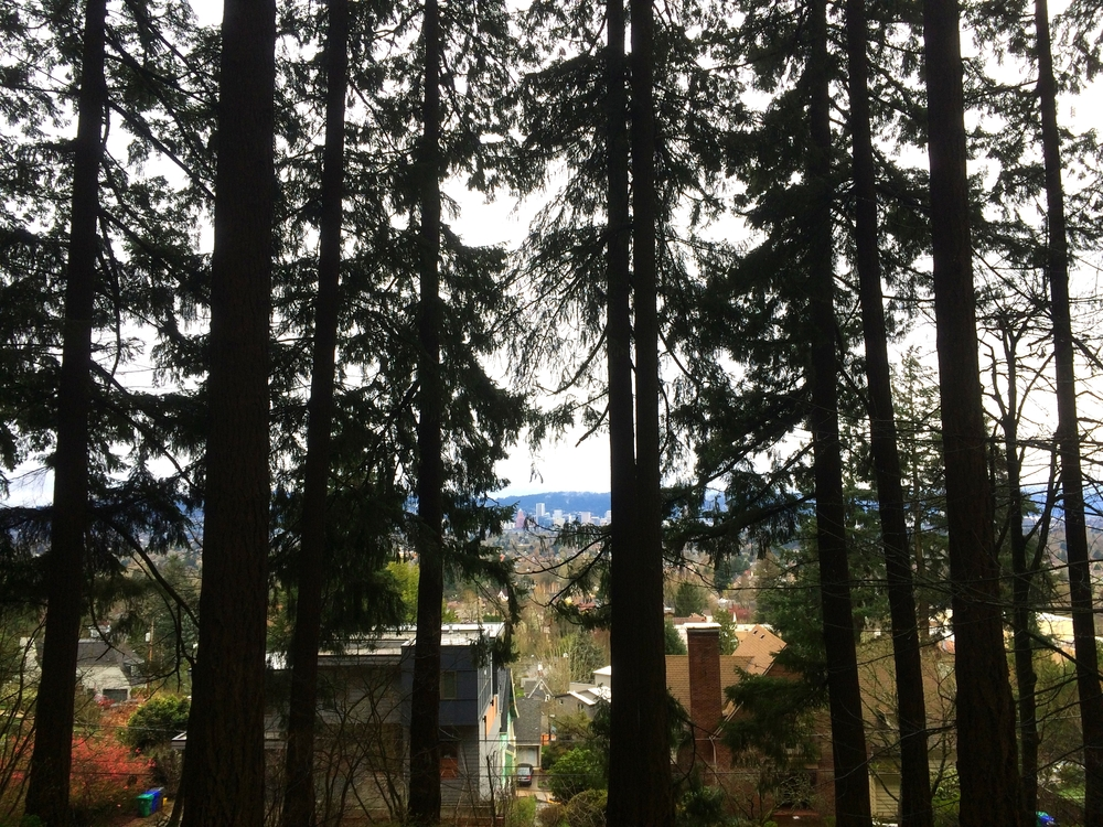 Distant downtown Portland, as seen between the trees on Mt. Tabor.