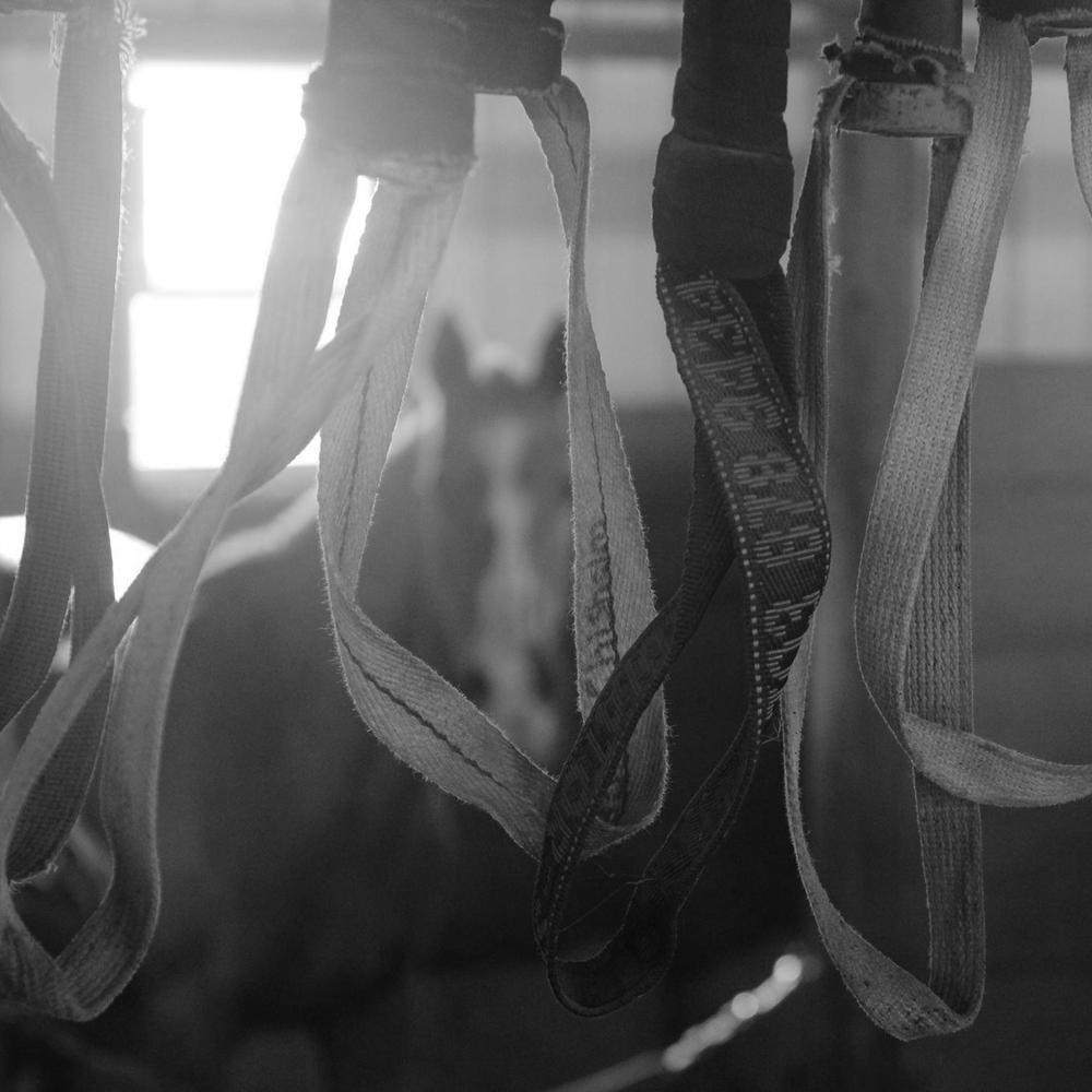 horsestraps.jpg