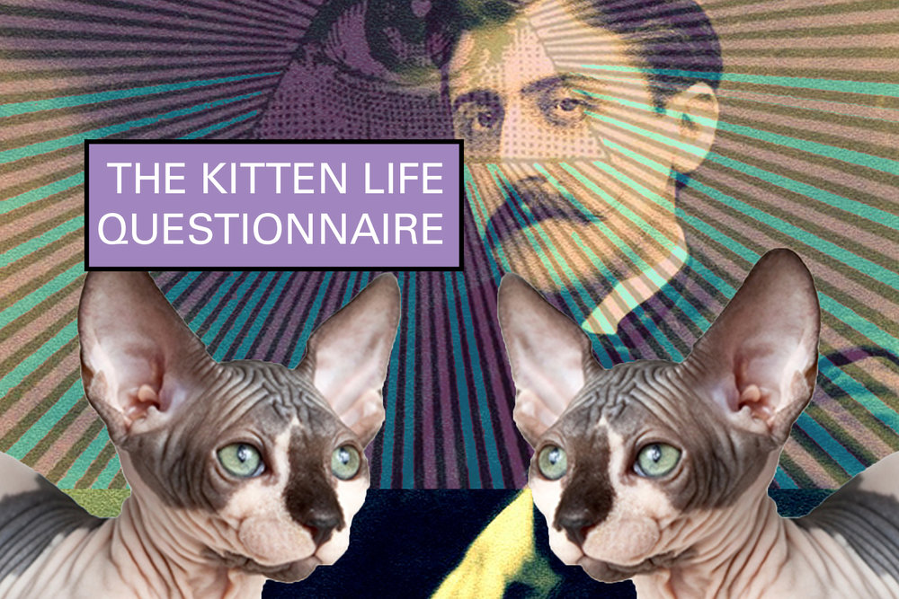 the kitten life, proust questionnaire, the kitten life questionnaire