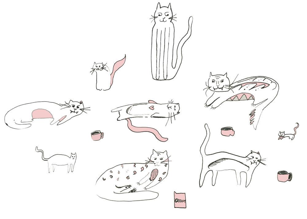 Vancouver Catfé, Catfé, Cat Café, cats, kittens, vancouver