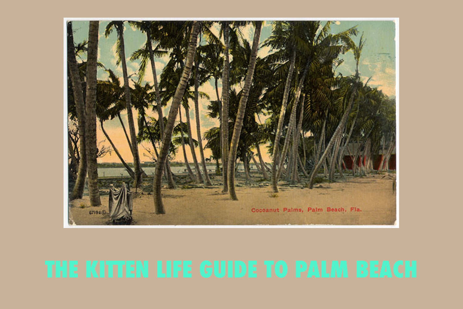 PALM BEACH FOR CATS: A TRAVEL GUIDE — The Kitten Life