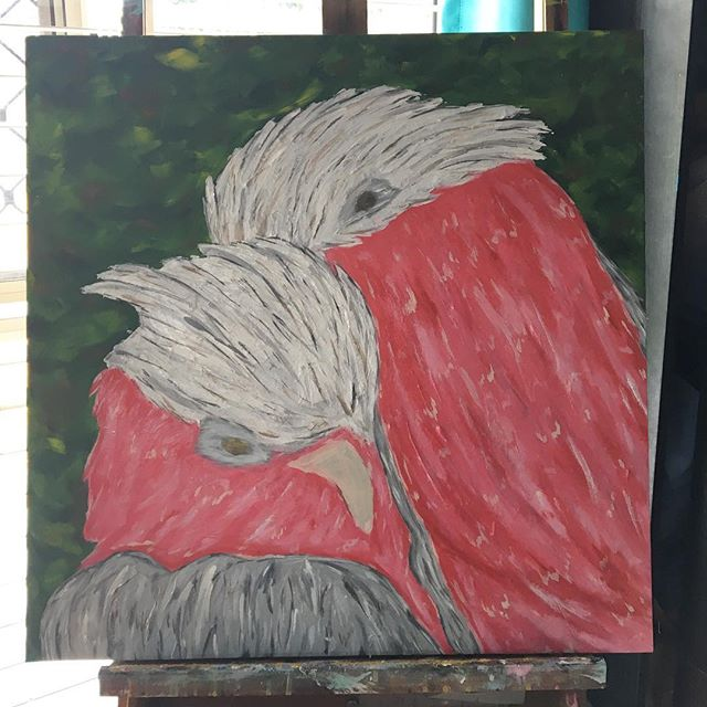 These guys look a lot better now they have some eyes roughed in! #acrylicartist #galah