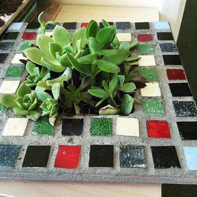 We made vertical succulent gardens at doodlebug camp. 3-6 year olds painted, mosaic'd grouted and planted these amazing gardens.  So darn cool. #painting #kids #camp #mosaic #grout #planting #succulents. #gardens. #doodlebug #art