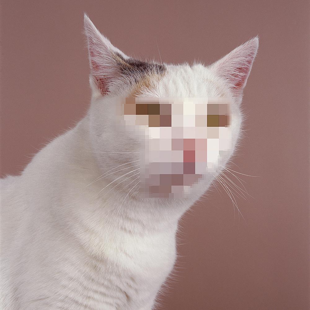 Anonymous Cat, 2000