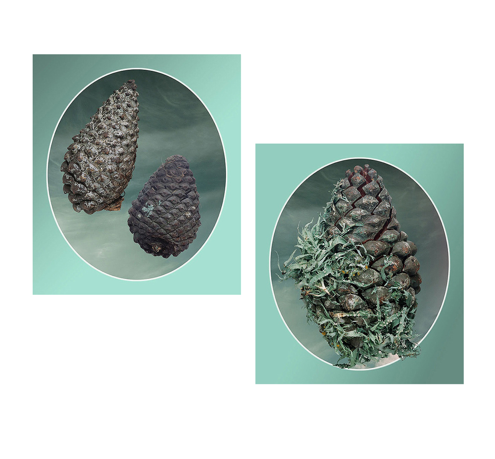 From the Pinecone Brochure (1) and (2), 2004