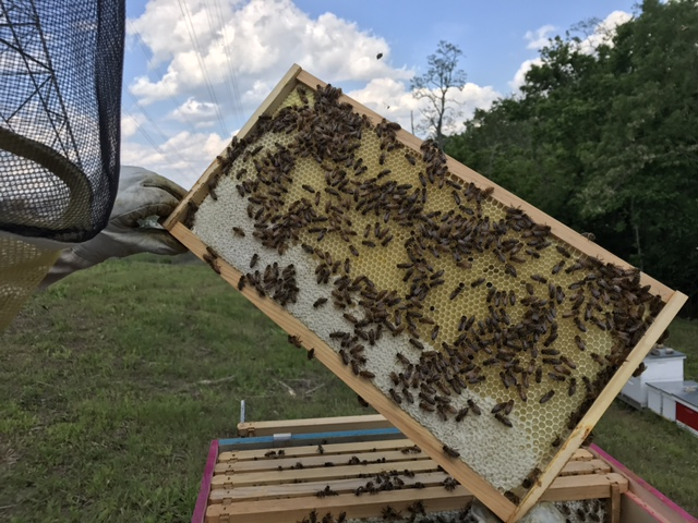 Gaiser Bee Co Host A Hive Cincinnati Ohio