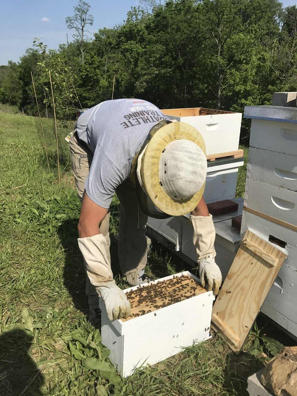 Here, Cory is transferring the swarm to a larger box since their numbers were so high.