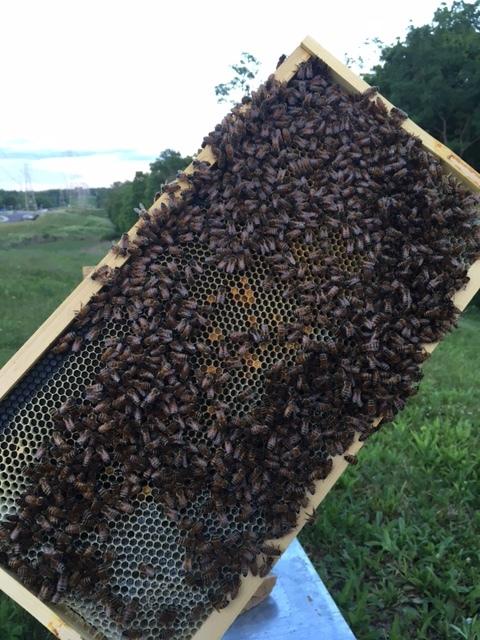 Waldorf School Hive 2.JPG