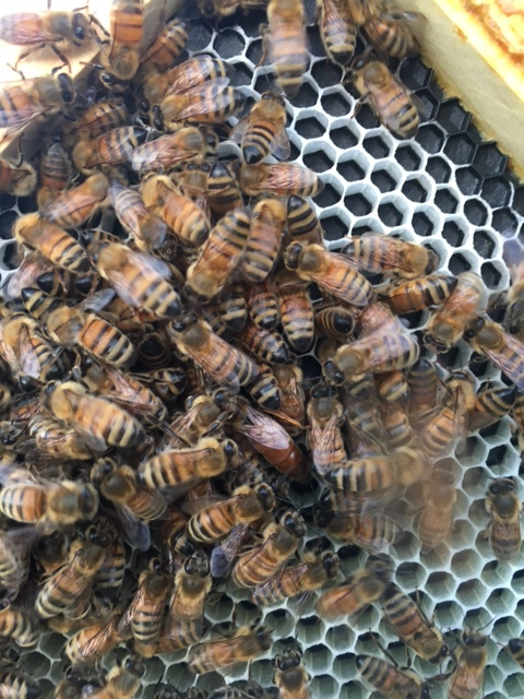 Waldorf School Hive 3.JPG