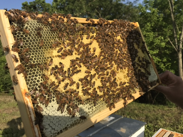 Host A Hive Cincinnati Ohio Honey Bees Swarm