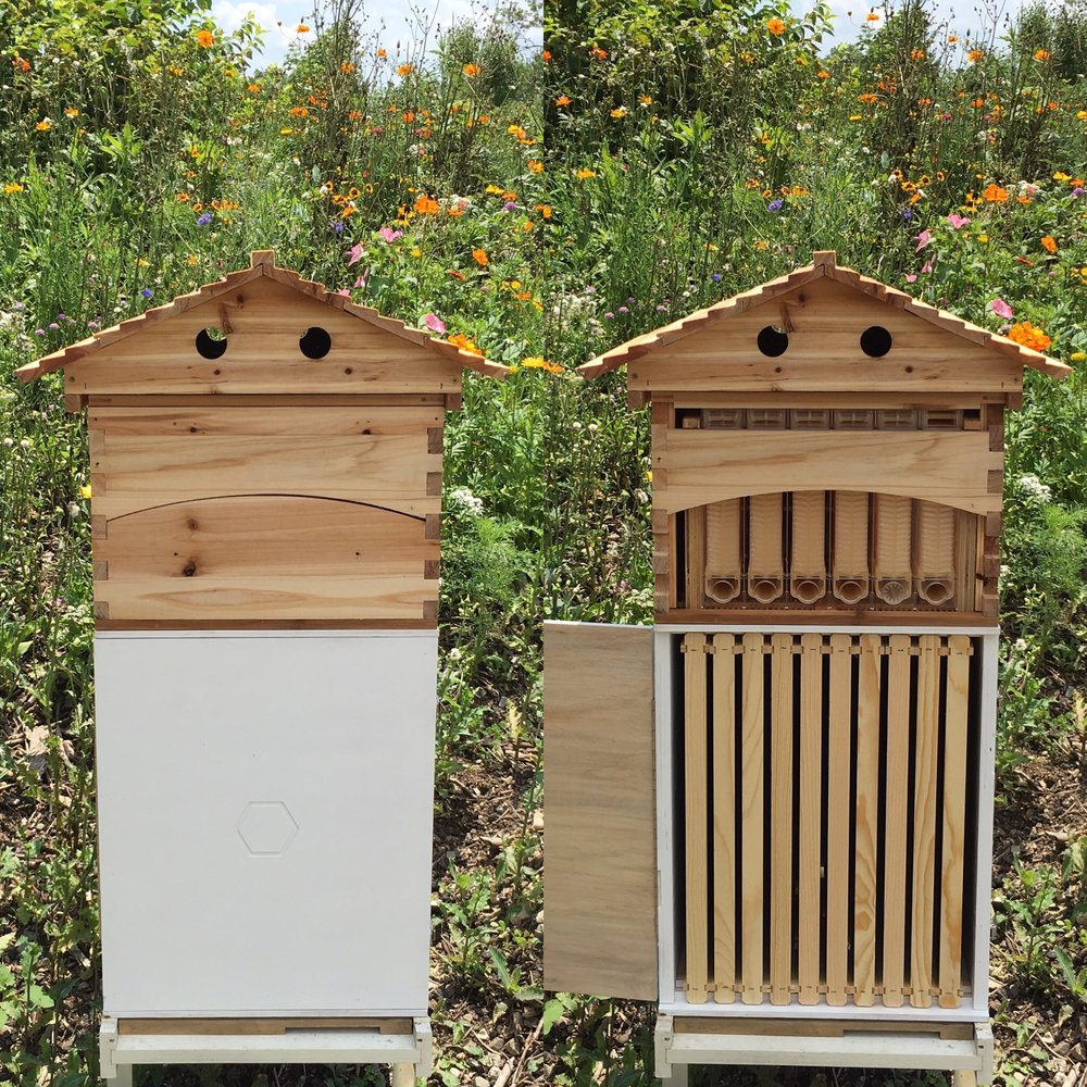 Des Moines Backyard Beekeepers, #iowa, #ag, #bees