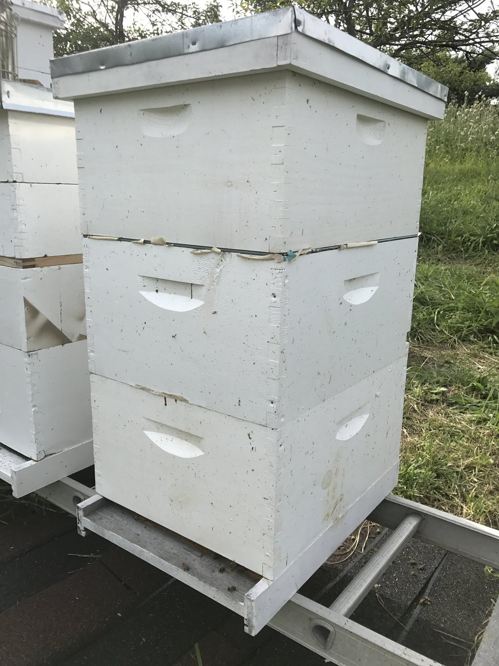 Kling Family Hive -
