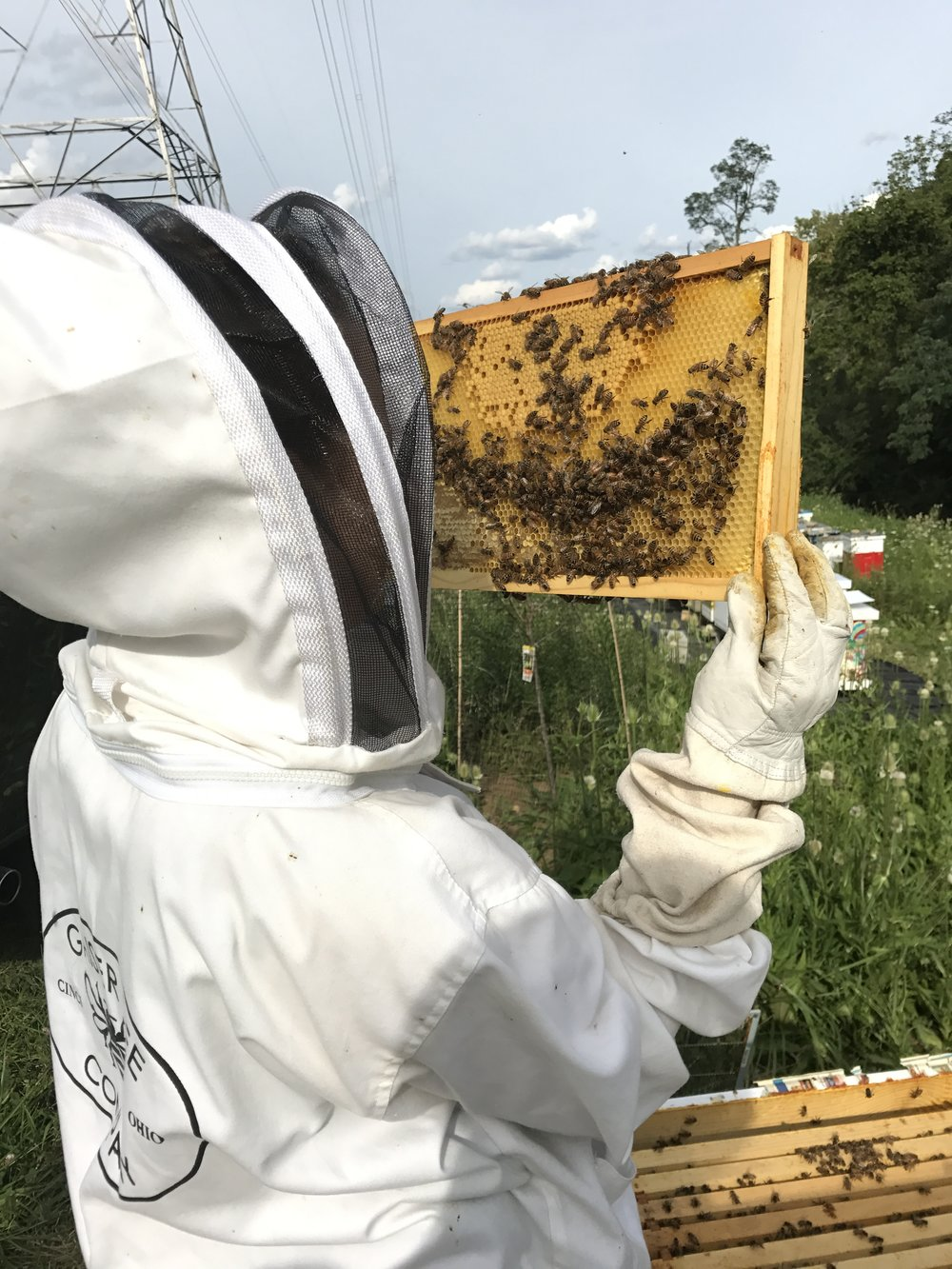 save the bees — HOST A HIVE BLOG — Gaiser Bee Co