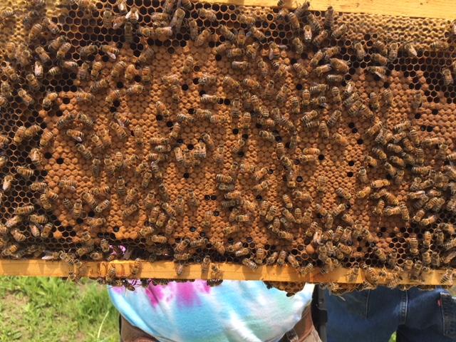 Ritter Family Host A Hive Gaiser Bee Co.
