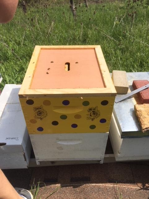 Mrabet Family Host A Hive Gaiser Bee Co.