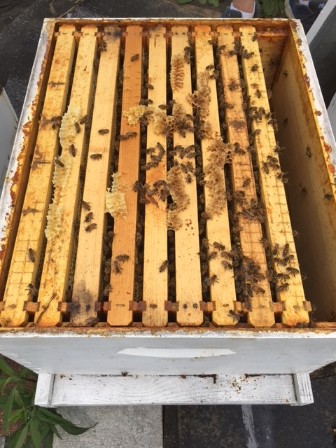 Lewis Family Host A Hive Gaiser Bee Co.