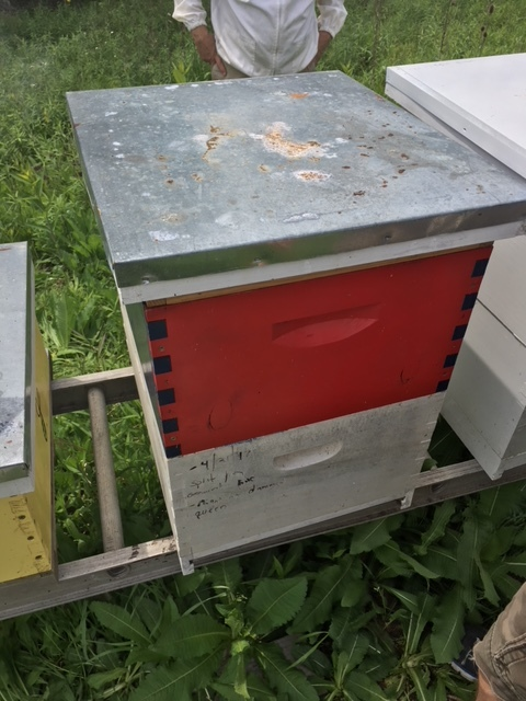 Kifer Hive