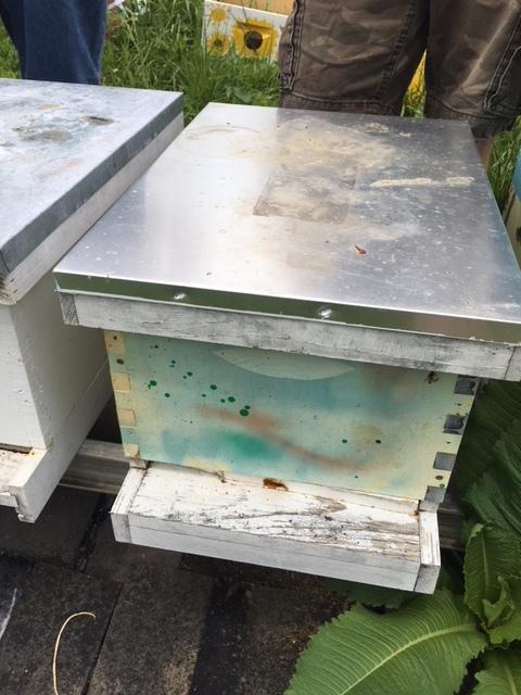 Teichtmc Family Host a Hive