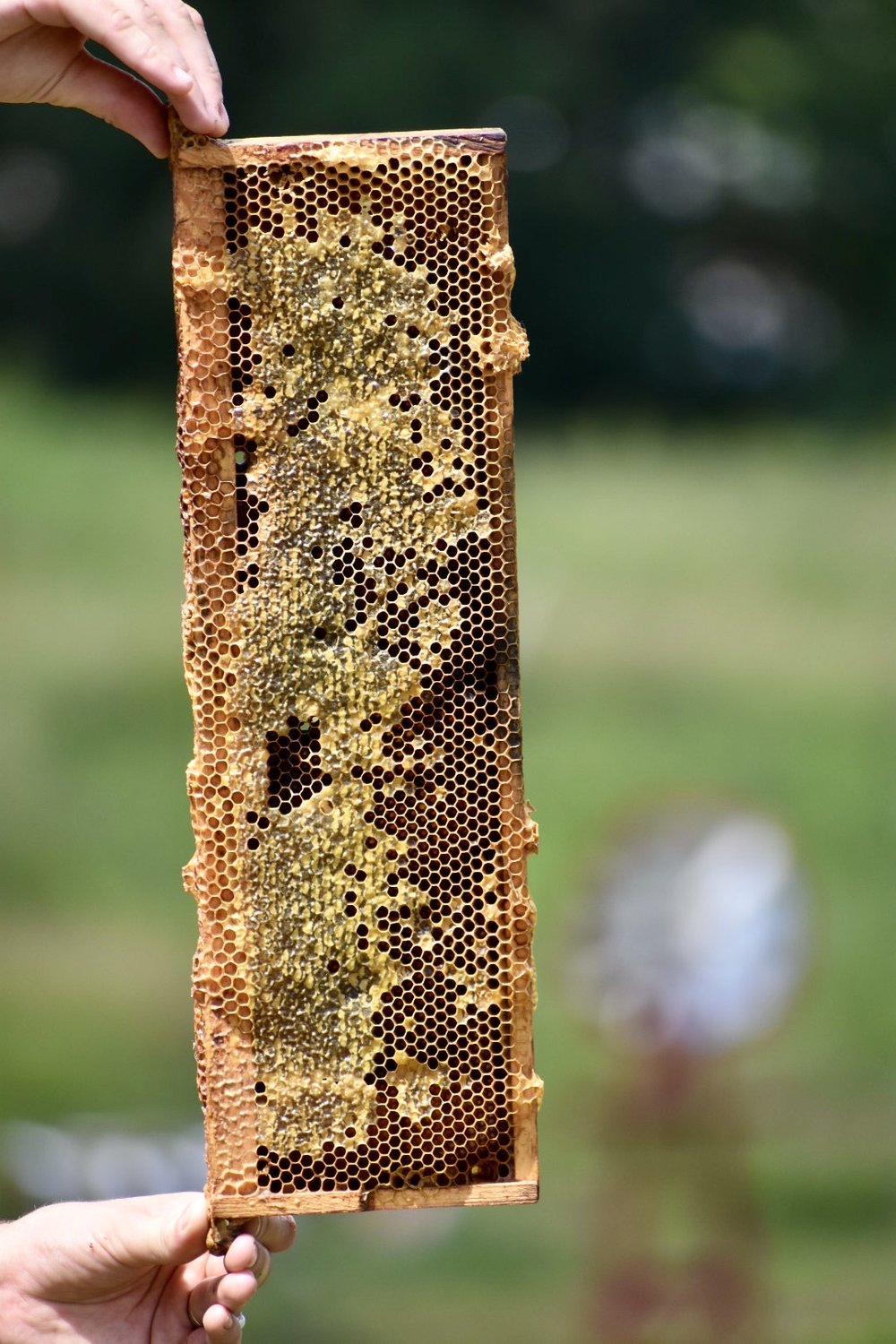 Frames Host A Hive Gaiser Bee Co.