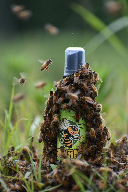 Swarm Host A Hive Gaiser Bee Co.