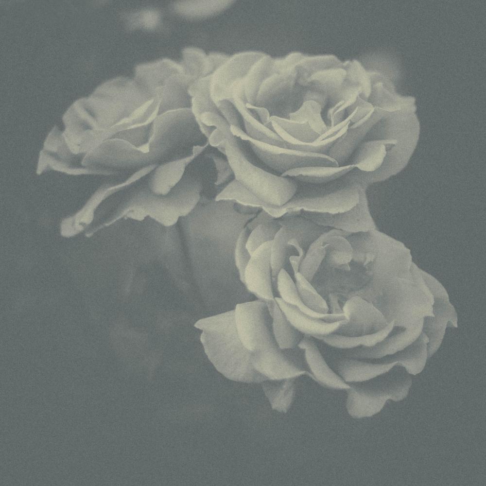Hidden_Hospitals_findingflowers.jpg