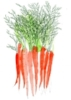 1 wortel.LR.jpg