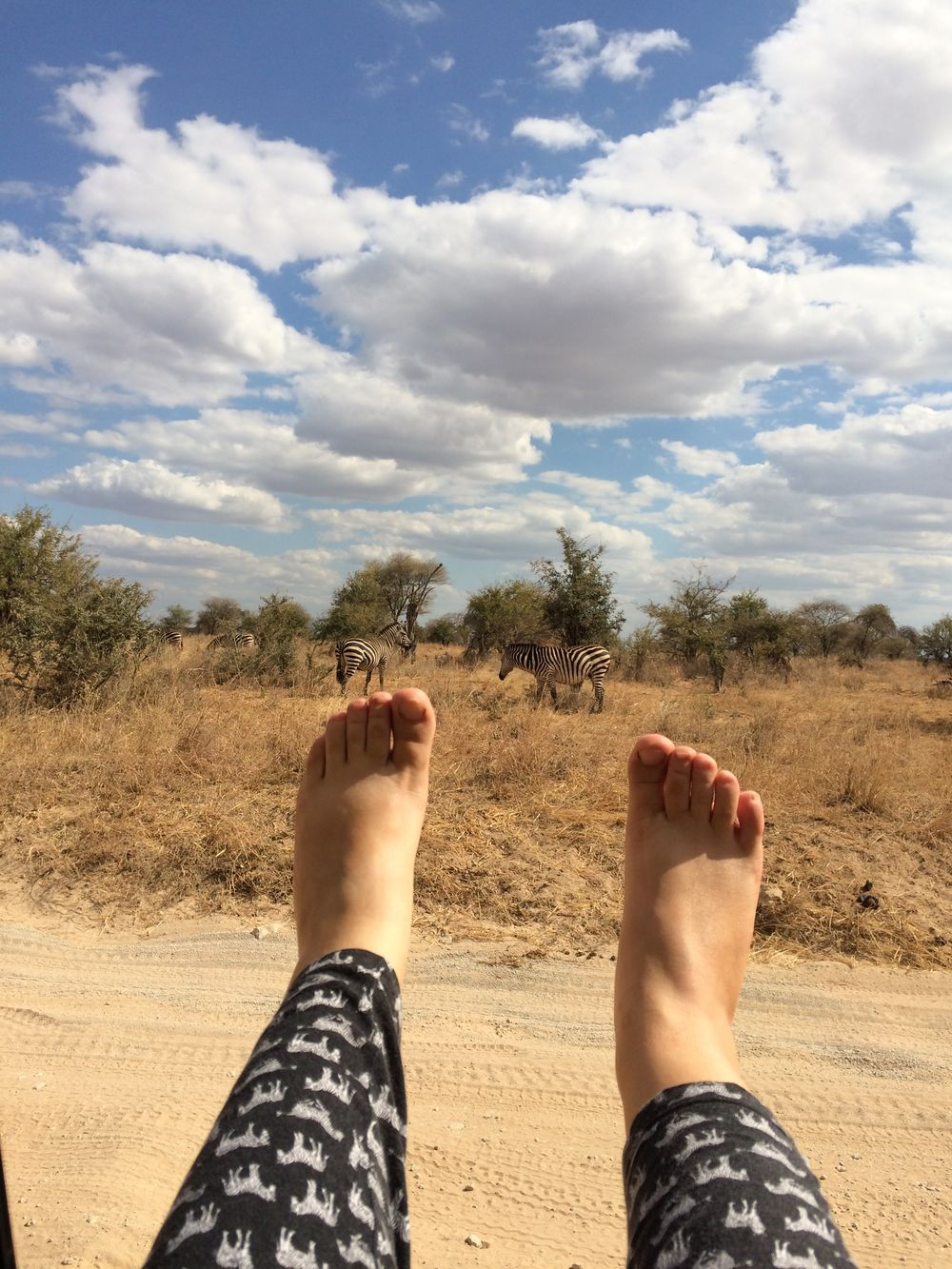 africa safari zebra