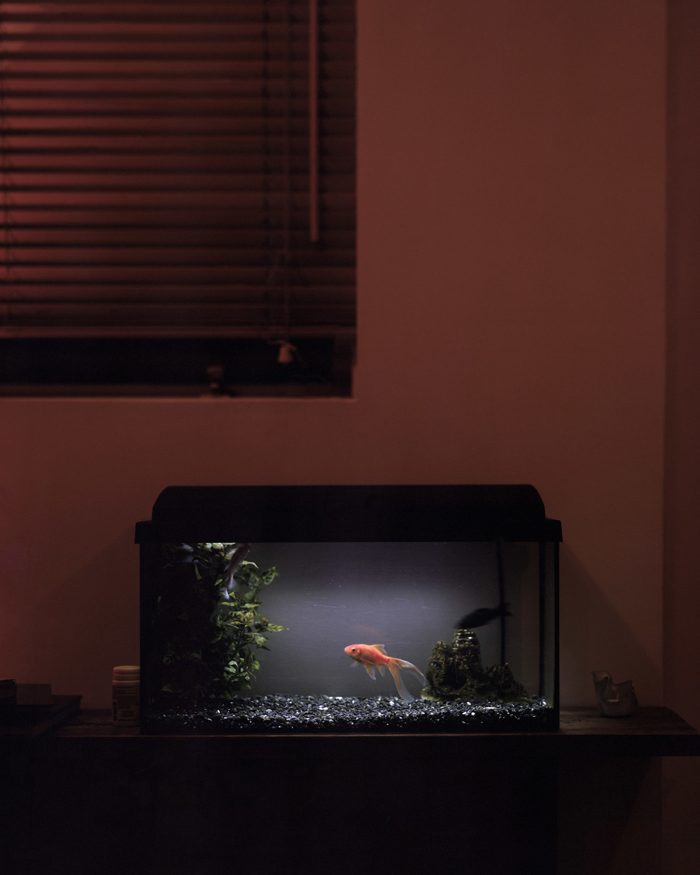 Erla's Goldfish, Reykjavik.jpg
