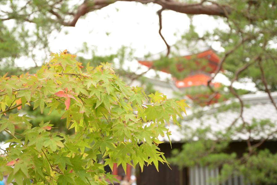 Maple Leaves Kiyomizu-dera