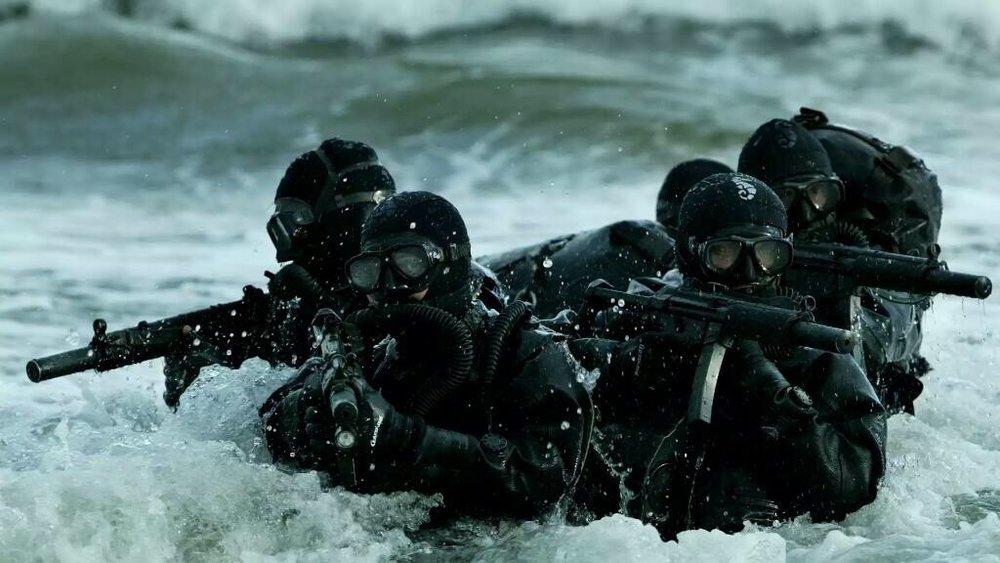 Seals surf.jpg
