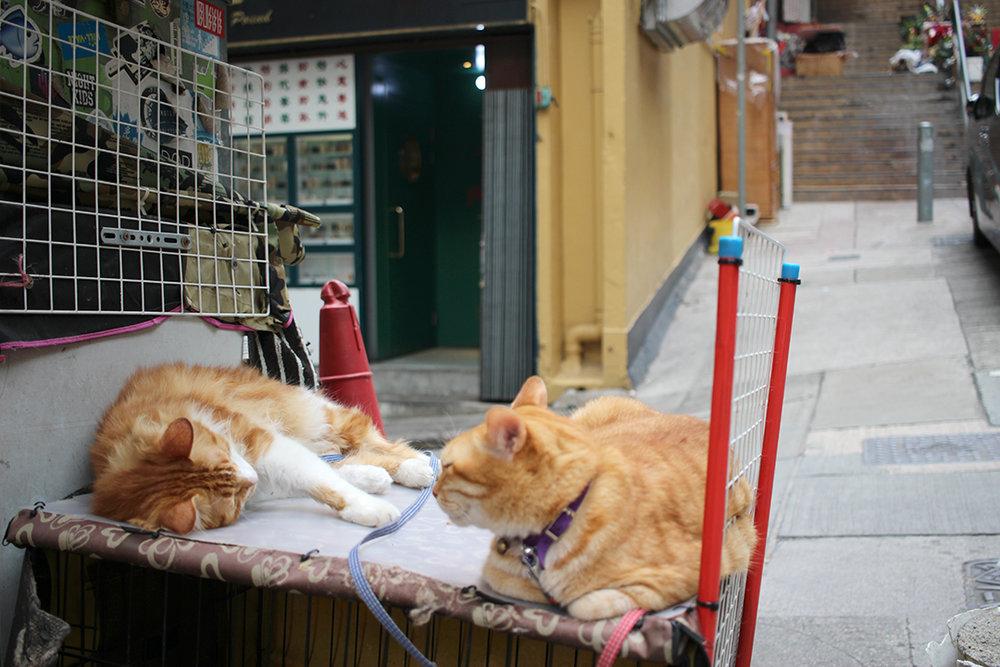 les chats du restaurant de quartier For Kee