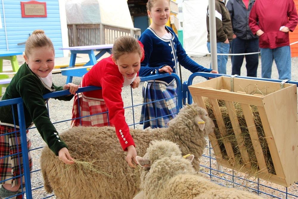 dancers and sheep .jpg