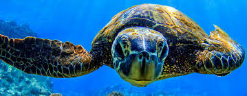 turtle.jpg