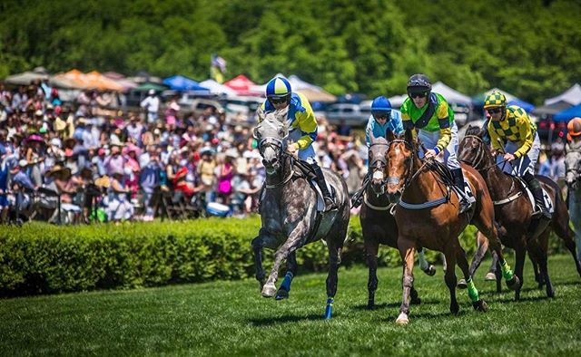Congratulations are in order for Moscato, winner of the Michael G. Walsh Novice Stakes at Saratoga earlier this week! - The Bruton Street-US runner also took first place in The Green Pastures Hurdle at the 2017 Iroquois Steeplechase, pictured below.
