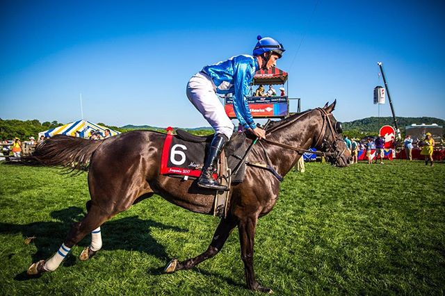 Get this! The average horse at Steeplechase weighs an astounding 1,100 lbs while the average jockey weighs 140 lbs #SteeplechaseScoop